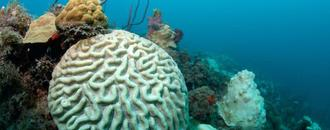 In New York lab, centuries-old corals hold clues to climate shifts