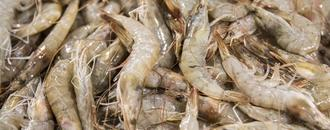 China Points to Shrimp as Virus Carrier After Salmon Debacle