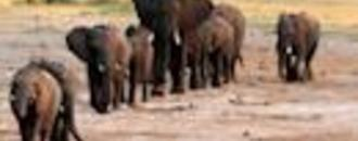 Zimbabwe: Elephants die from