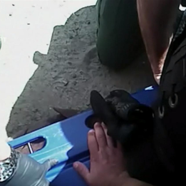 New body camera video of man who died in police custody released