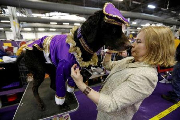Field of seven dogs to vie for Westminster Kennel Club grand