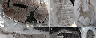 Scientists find abundance of 500,000-year-old fossils in China