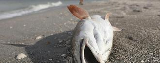 Florida Declares State Of Emergency As Red Tide Spreads