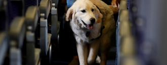 An emotional support dog bit a six-year-old girl on a Southwest Airlines flight - and some people are blaming the child (LUV)